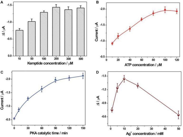 Optimization of experimental conditions. (A) The immobilization concentration of kemptide. Various kemptide concentrations (10, 50, 100, 200, 300, and 500 μM) were applied. (B) ATP concentration optimization. A series of ATP concentrations including 10, 20, 40, 60, 80, 100, and 120 μM were used. (C) The optimization of PKA catalytic time. The employed PKA catalytic time was 0, 10, 30, 60, 90, 120, and 150 min, respectively. (D) The optimization of AgNO 3 concentration during the synthesis of rGO-PDA-AgNPs nanocomposite. Various AgNO 3 concentration (1, 5, 10, 20, and 50 mM) were studied. The error bars were based on at least three repetitive experiment results. The used PKA concentration was 10 U/mL.