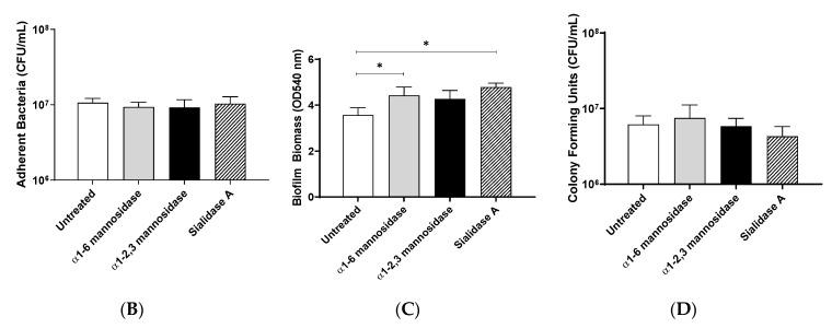 Pre-treatment of pharyngeal cell surface with α1-6 mannosidase and Sialidase A results in significantly increased M12 GAS biofilm biomass. ( A ) Assay schematic for the characterization of biofilms formed on each of the exoglycosidase (α1-6 mannosidase, α1-2,3 mannosidase, and Sialidase (A) pre-treated pharyngeal monolayers vs. untreated. ( B ) Initial adherence enumerated for planktonic GAS upon 2 h incubation. 72 h biofilms are assessed for ( C ) biofilm biomass via crystal violet staining and ( D ) colony forming units via enumeration. Data represents mean ± SEM, with statistical analysis performed using a one-way ANOVA with Tukey's multiple comparisons test * ( p ≤ 0.05); n = 3 biological replicates, with 3 technical replicates each.