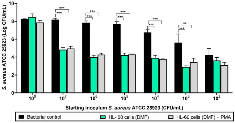Viable counts of 24-hour-old biofilms formed by different concentrations of S. aureus ATCC 25923 cocultured with HL-60 cells on 96-well microplates. Black columns represent the bacterial control (viable attached cells in the absence of HL-60 cells). Green columns show the coculture of S. aureus ATCC 25923 with HL-60 cells differentiated with N , N -dimethylformamide (DMF). Gray columns show the coculture of S. aureus ATCC 25923 with HL-60 cells differentiated with DMF and activated with phorbol 12-myristate 13-acetate (PMA). Values are means and SD of three independent experiments ( *** p