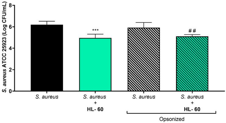"""Viable counts of adhered opsonized and nonopsonized S. aureus ATCC 25923 on titanium coupons after coculture with HL-60 cells for 24 h. The left half of the graph includes the nonopsonized S. aureus ATCC 25923 biofilm formation, in absence (black column) or cocultured with HL-60 cells (green column). The right half includes the opsonized S. aureus ATCC 25923 biofilm formation, in absence (white/black column) or cocultured with HL-60 cells (green/black column). """"*"""" indicates statistical differences with the nonopsonized S. aureus ATCC 25923 in monoculture, while """"#"""" represents statistical differences with the opsonized S. aureus ATCC 25923 in monoculture with Welch's unpaired t -test ( *** p"""