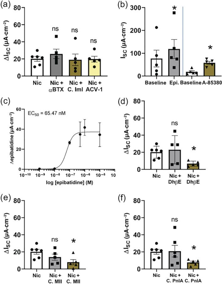 Effect of nicotinic receptor agonists and antagonists on transepithelial ion transport of mouse tracheal epithelium. (a) The α7 nicotinic ACh receptor (nAChR) antagonist α‐bungarotoxin (αBTX, 100 nmol·L −1 , n = 5, apical) or the α7 nAChR antagonist α‐conotoxin ImI (C. ImI, 4 μmol·L −1 , apical) or the α9α10 nAChR antagonist ACV‐1 (100 nmol·L −1 , apical) did not influence the nicotine effect (100 μmol·L −1 , apical, ΔI SC ; ns, not significant). (b) The epibatidine‐induced (α4β2, α3β2, α4β4 and α3β4 nAChR agonist) current peak (1 μmol·L −1 ) was significant compared to baseline current ( n = 5, * P
