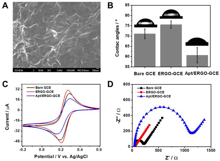 ( A ) Scanning electron microscopy (SEM) image of ERGO-GCE. ( B ) Contact angle data of water droplets on GCE, ERGO-GCE, and Apt/ERGO-GCE. ( C ) Cyclic voltammetry (CV) curves recorded at a scan rate of 10 mV·s −1 and ( D ) Nyquist plots of GCE, ERGO-GCE, and Apt/ERGO-GCE in 0.1 M tris-buffered saline (TBS) buffer containing 5.0 mM [Fe(CN) 6 ] 3− .