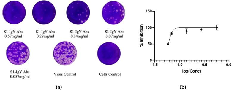 Evaluation of the neutralizing potential of anti-S1 IgY antibodies, using plaque reduction neutralization test. ( A ) MERS-CoV (MOI 0.01) was incubated with different concentrations of anti-S1 IgY antibodies and added to Vero E6 cells. After virus adsorption, agar medium was added to the Vero E6 cells, and the plaques that formed were stained with crystal violet, each IgY concentration was tested in triplicate. ( B ) Percent inhibition of anti-S1 IgY antibodies with different concentrations. The best fit equation is: