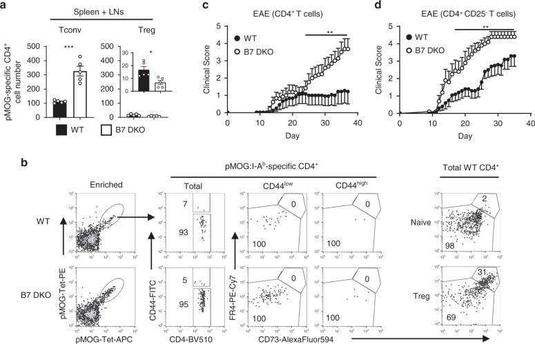 Self-reactive CD4 + T cells capable of inducing autoimmune response accumulate in the periphery in the absence of B7-CD28 co-stimulation. a Peripheral pMOG-specific CD4 + T cell number was increased in B7 DKO mice. Each group n = 5. Data shown are combined results of at least <t>three</t> independent experiments. Tconv p = 0.0002, Treg p = 0.0114. Data are mean ± SEM with dots representing individual values of biologically independent animals. Statistical differences between groups were calculated using unpaired, two-tailed Student's t -test. b pMOG-specific peripheral CD4 + T cells do not have an anergic phenotype. Each group n = 4. Data are a representative <t>FACS</t> plot of three independent experiments. c CD4 + T cells from B7 DKO mice strongly induced EAE. WT n = 12, B7 DKO n = 13 biologically independent animals. Data are pooled results of two independent experiments (mean ± SEM). p = 0.0089. Medians of the total clinical score during day 25–37 were compared by two-tailed non-parametric Mann–Whitney test. d Treg-depleted CD4 + T conv cells from B7 DKO mice strongly induced EAE. WT n = 10, B7 DKO n = 10 biologically independent animals. Data are pooled results of two independent experiments (mean ± SEM). p = 0.0011. Medians of the total clinical score during day 15–35 were compared by two-tailed non-parametric Mann–Whitney test. * p
