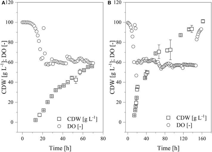 Time course of the online measured dissolved oxygen (DO) concentration and cell dry weight (CDW) in a fed-batch process using the Labfors3 system. (A) Production strain K. lactis GG799 and (B) mutant strain K. lactis GG799Δ Inv .