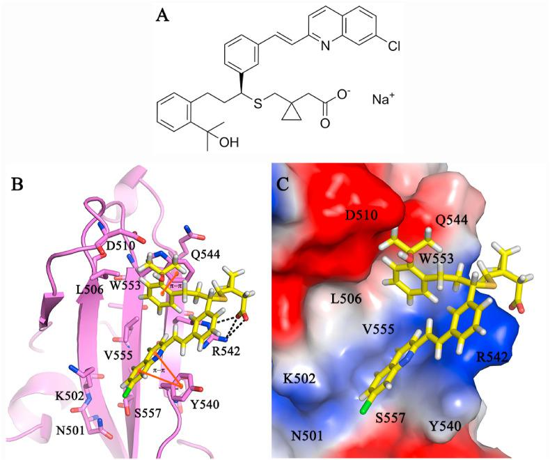 In silico screening on the molecular interaction model of MSH with MERS-CoV RBD. (A) Chemical structure of MSH. (B) Cartoon model highlighting molecular interactions of MSH. The salt bridge interactions (black dotted lines) between the acetic acid group of MSH and R542 residue of MERS-CoV RBD. The ligand-binding was further stabilized by (i) π- π stacking interactions (highlighted in orange lines) between the phenyl, chloroquinoline groups of MSH with W553, Y540 residues respectively, (ii) alkyl hydrophobic interactions with surrounding V555, CH 2 sidechain atoms of R542, K502, and S557 residues of MERS-CoV RBD. (C) Potential surface view of MSH binding position on MERS-CoV RBD.