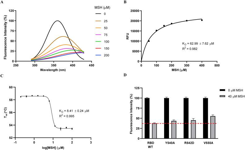 MSH binds to MERS-CoV RBD in a dose-dependent manner. (A) Trp fluorescence quenching results of RBD and MSH, showing the extent of dose-dependent quenching from the comparison of peak heights and red-shift. Recombinant MERS-CoV RBD was used as control. (B) Binding curve plotted from quenching data of two independent assays. (C) RBD-MSH interaction analysis by Differential Scanning Fluorimetry (DSF). (D) Fluorescence quenching data on RBD mutants (V555A, R542D, Y540A) comparing the extent of quenching effect with MSH addition.