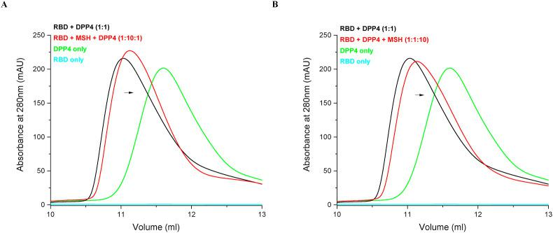 Potential effects on MERS-CoV RBD-DPP4 complex formation inhibition and complex dissociation by MSH. Analytical gel filtration chromatography experiments exhibited slight but distinct and consistent peak shifts from RBD-DPP4 complex peak towards DPP4 only peak in (A) RBD + MSH followed by the addition of DPP4 and (B) RBD-DPP4 complex + MSH.
