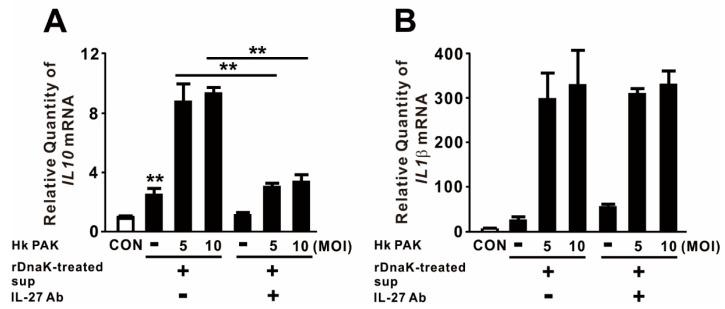 IL-27 produced in response to DnaK increases expression of IL10 . dTHP-1 cells were treated with 1 μg/mL rDnaK for 16 h, and the supernatant was collected as conditioned medium (rDnaK-treated Sup). Conditioned media were incubated in the presence and absence of IL-27 antibody for 1 h at room temperature. These conditioned media were transferred to newly seeded dTHP-1 cells, and then the cells were treated with Hk PAK at an MOI of 5 or 10 for 4 h. After treatment, the mRNA levels of IL10 ( A ) and IL1β ( B ) were measured by qRT-PCR. Data are expressed as means ± SD ( n = 3). **, p