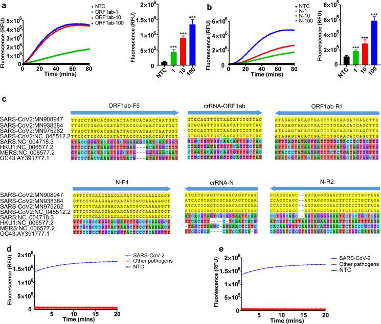 Sensitivity and specificity analysis. ( a, b ) Serial dilutions of in vitro–transcribed ORF1ab ( a ) and N ( b ) for LoD determination. After amplification at 42°C for 20 minutes, 10 μL of each reaction was transferred to 40 μL of the Cas12a mixture for cleavage assays. Bar graphs represent fluorescent signal obtained at 10 minutes for the Cas12a reaction. The data are presented as the means ± SD ( n = 15). Unpaired 2-tailed t test was used to analyze the difference from NTC. *** P