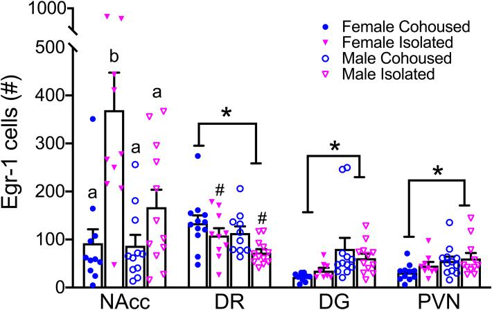 Social isolation alters Egr-1 staining in a sex- and brain region-specific manner. Isolated female prairie voles had significantly higher levels of Egr-1 in the NAcc. Social isolation was associated with lower Egr-1 levels in the DR. Females had higher Egr-1 levels in the DR, but lower Egr-1 levels in the DG and in the PVN compared to males. Egr-1, early growth response protein 1, NAcc, nucleus accumbens, DR, dorsal raphe, DG, dentate gyrus of the hippocampus. Bars indicate mean ± SEM. * represents a main effect of sex, p