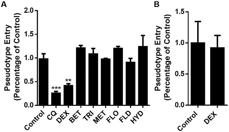 Effect of GCs on the entrance of SARS-CoV-2 spike pseudotyped virus into ACE2 h cells. A. DEX inhibit the entrance of SARS-CoV-2 spike pseudotyped virus into ACE2 h cells; B. DEX had no effect on pseudovirus gene expression. The experiments were repeated three times. Data are presented as mean ± S.D. ** p