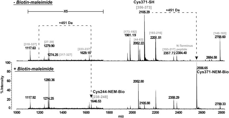 """Peptide mass fingerprinting of untreated or Biotin-maleimide-treated CrGSNOR1 . Recombinant CrGSNOR1 was incubated in the presence of 1 mM Biotin-maleimide for 20 min and then trypsin digested. The peptide mixture was analyzed by MALDI-TOF MS. Sequence of peptides belonging to CrGSNOR1 is indicated in brackets (numbering according to Fig. 2 ). Cysteines modified by Biotin-maleimide are annotated with the mention """"NEM-Bio"""" and the peak corresponding to the peptide sequence [1−12] of CrGSNOR1 is indicated as N-terminus peptide as it is fused with the 7xHis affinity purification tag."""