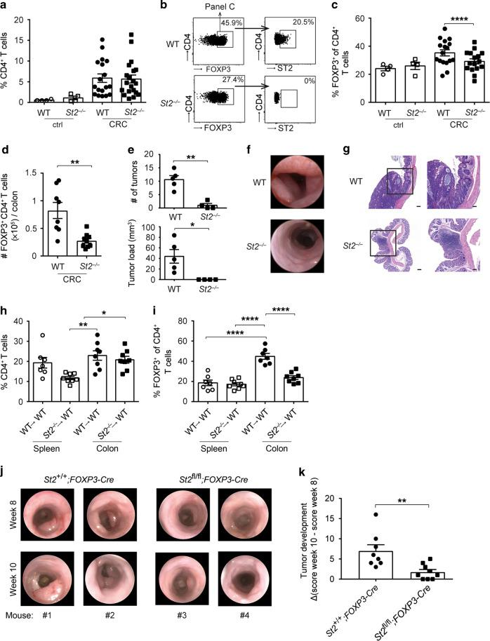 Treg frequencies are reduced in tumors of St2 −/− mice. Wild-type (WT) or St2 −/− C57BL/6 mice were treated with AOM/DSS (CRC) or left untreated (ctrl) and a frequencies of CD4 + T cells in colonic tissues were measured after 10 weeks ( n = 4–20 mice per group). b Flow cytometry plots from one representative CRC mouse per group depicted in c showing frequencies of CD4 + FOXP3 + Tregs (panels on the left) and frequencies of ST2-expressing cells among FOXP3 + Tregs (panels on the right). c Frequencies of FOXP3 + Treg were measured among CD4 + T cells based on the gating strategy shown in b . d Absolute numbers of FOXP3 + Treg were measured in the colon of AOM/DSS-treated mice ( n = 8–9 mice per group). e Tumor numbers and tumor load were assessed in the colon of CRC mice ( n = 5 mice per group). f Endoscopy pictures showing tumors in the distal colon from one representative CRC mouse per group depicted in e . g Hematoxylin and eosin (H E) sections displaying representative colon tumors in the indicated groups of mice. Scale bars: overview: 200 μm; inlay: 100 μm. Indicated sets of chimeric mice were treated with AOM/DSS and h frequencies of CD4 + T cells or i frequencies of CD4 + FOXP3 + Treg were measured in the indicated organs after 10–13 weeks ( n = 7–8 mice per group). j Intestinal tumorigenesis was assessed by endoscopy and k tumor development was calculated in the indicated groups of mice by subtracting tumor score on week 10 from tumor score on week 8 after the start of AOM/DSS treatment ( n = 8–9 mice per group). Data are mean ± SEM and show a , c four pooled independent experiments out of six or e one representative experiment out of three. d , h , i , k data were pooled from two independent experiments. Statistical analyses were performed using a , c–e , k standard Student's t- test or h , i one-way ANOVA with Bonferroni post-test. * P
