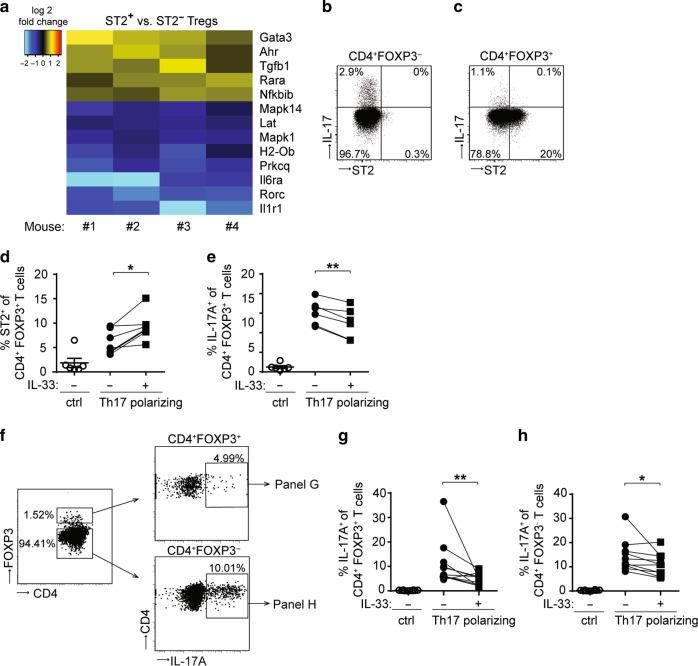 """IL-33 restrains IL-17 production in CD4 + T cells. a Foxp3 /eGFP mice were treated with AOM/DSS and eGFP + CD4 + T cells were isolated from CRC lesions for transcriptomic analysis. Heat map showing all genes in the gene ontology pathway """"Th17 cell differentiation"""" (ko04659) that are differentially expressed in ST2 + versus ST2 − eGFP + Tregs isolated from CRC lesions from the indicated four mice (adjusted p -value p ≤ 0.05). Blue indicates higher transcript expression in ST2 − Tregs and yellow/red higher expression in ST2 + Tregs. BALB/c mice were treated with AOM/DSS and FOXP3 − CD4 + T cells b or FOXP3 + CD4 + Tregs c were analyzed in the intestine for ST2 and IL-17 expression. Shown are flow cytometry plots from each one representative sample out of three. d–h Sort-purified eGFP + b , c or eGFP − d , f CD4 + T cells from spleens of naïve Foxp3 /eGFP reporter mice were stimulated with anti-CD3/anti-CD28 antibodies (ctrl) or cultured under Th17 polarizing conditions in the presence or absence of IL-33. d Frequencies of ST2-positive or e IL-17A-positive cells were measured among CD4 + FOXP3 + Tregs. f Flow cytometry plots from one representative experiment showing the gating strategy applied to assess the proportion of IL-17A-expressing cells among FOXP3 + (right upper panel) or FOXP3 - CD4 + T cells (right lower panel). In this particular dataset, eGFP − CD4 + T were cultured under Th17-polarizing conditions, in the presence of IL-33. Frequencies of IL-17A-expressing cells were measured among g CD4 + FOXP3 + Tregs or FOXP3 − CD4 + T cells h . d , e Data are mean ± SEM and were pooled from two representative experiment ( n = 6 mice). Statistical analyses were performed using paired Student's t -test. g , h Data are mean ± SEM ( n = 10 mice, pooled from three independent experiments) and statistical analyses were performed using Wilcoxon matched-pairs signed rank test. * P"""