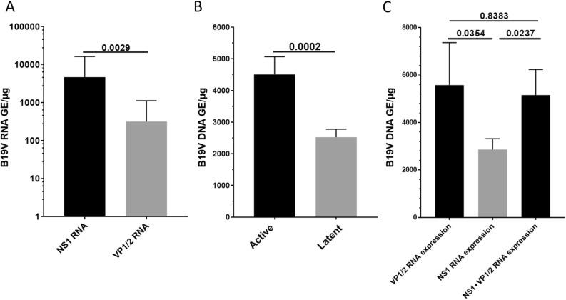 ( A ) The number of viral transcripts of <t>NS1</t> compared to VP1/2. ( B ) Viral DNA loads in EMBs with active or latent infection. ( C ) Viral DNA load compared between EMBs with detectable <t>VP1/2-RNA,</t> NS1-RNA or NS1- and VP1/2-RNA expression (ANOVA p = 0.0427). Numbers above the bars represent p-values.