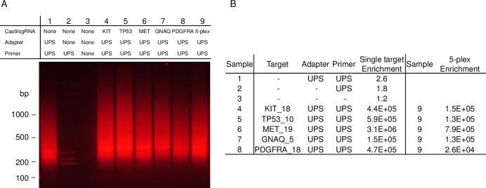 Gel electrophoresis and qPCR results of enrichment from CAMP on five single targets and a 5-plex. (A) Gel electrophoresis results from CAMP targeting loci in KIT exon 18 (Lane 4), TP53 exon 10 (Lane 5), MET exon 19 (Lane 6), GNAQ exon 5 (Lane 7), and PDGFRA exon 18 (Lane 8). Results of the 5-plex of these targets is shown in Lane 9. Controls are shown in Lanes 1–3: Lane 1 shows reaction without Cas9/sgRNA but with UPS adapter and UPS primer, Lane 2 shows reaction without Cas9/sgRNA and without adapter but with UPS primer, and Lane 3 shows reaction without Cas9/sgRNA, UPS primer, and UPS adapter. (B) qPCR results from CAMP on the five individual targets and 5-plex. Enrichment was calculated by dividing the qPCR value for each target by an off-target qPCR value and then normalizing to a DNA standard sample. Enrichment for Samples 1–3 are averages for the five individual targets.