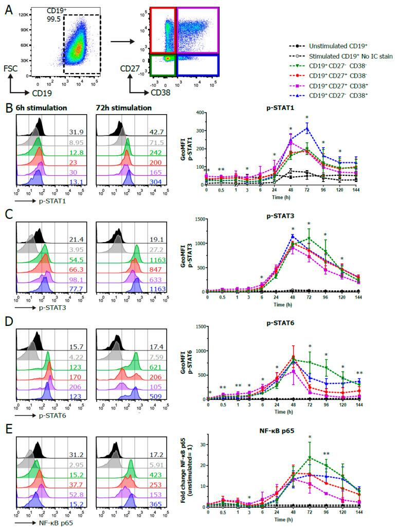 Phosphoflow analysis of stimulated human B cells show differences between CD27/CD38 subpopulations. Human B cells ( n = 3–4) were stimulated with a human-CD40L-expressing 3T3 feeder layer, an anti-Ig F(ab) 2 mix (5 μg/mL) targeting IgM/IgG/IgA and recombinant IL-4 (25 ng/mL) and IL-21 (50 ng/mL) cytokines, and multiple signaling proteins were analyzed by phosphoflow analysis over the course of a 6-day culture. ( A ) Representative FACS plots show the gating strategy for CD19 + and CD27/CD38 subpopulations by phosphoflow analysis after 96 h stimulation. ( B – E ) Representative histogram overlays of p-STAT1 ( B ), p-STAT3 ( C ), p-STAT6 ( D ) and NF-κB p65 ( E ) staining in unstimulated and stimulated CD19 + and CD27/CD38 subpopulations after 6 and 72 h stimulation (left), and the quantification of the geometric MFI (GeoMFI) within the different subpopulations over the course of 6 days of culture (right). Values depicted next to histograms represent the corresponding GeoMFI. For NF-κB p65 (E), fold change was calculated by normalizing to the expression in unstimulated CD19 + cells (set at value of 1). n = 3–4; p values were calculated using a mixed-effect analysis with Tukey's multiple-comparison test; * p