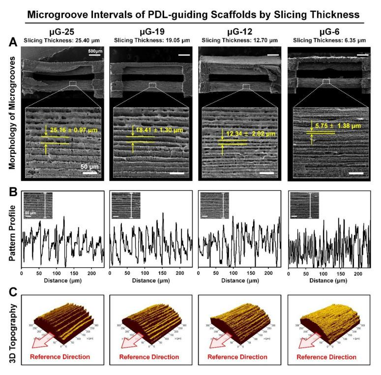 Qualitative and quantitative assessments to identify different of microgroove pattern intervals. ( A ) Scanning electron microscope (SEM) showed surface morphologies with the statistically calculated microgroove intervals in four different groups (μG-25, μG-19, μG-12, and μG-6) by different slice thickness. ( B ) Based on the SEM images, microgroove patterns were quantitatively analyzed and profiled by crossing the pattern surfaces on PDL-guiding architectures. ( C ) Using the confocal microscope, surface topographies were characterized, as was surface roughness.