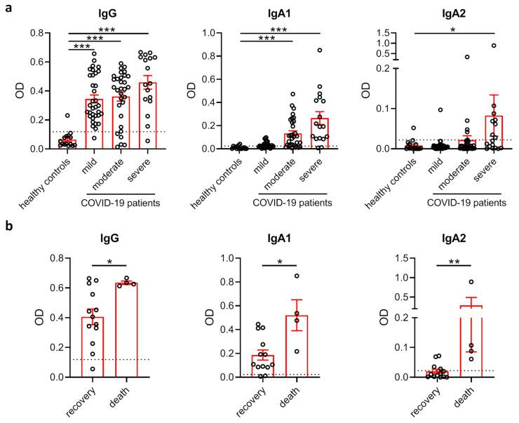 SARS-CoV-2-specific IgA2 levels correlate with disease severity. ( a ) Levels of IgG, IgA1 and IgA2 directed against S1+S2 protein of SARS-CoV-2 in the plasma of healthy control subjects (N = 15) as well as SARS-CoV-2-infected patients with no or mild disease symptoms (N = 34), moderate symptoms (N = 31) or severe symptoms requiring intensive care treatment (N = 17). Dotted lines represent mean + standard deviation (SD) of the healthy control group. ( b ) Levels of IgG, IgA1 and IgA2 directed against S1+S2 protein of SARS-CoV-2 in the plasma of COVID-19 patients with severe disease who recovered (N = 13) or died (N = 4). Dotted lines represent mean + SD of the healthy control group from ( a ). Significances were tested with the Kruskal–Wallis test followed by Dunn's multiple comparison test for all groups vs. the control group ( a ) and a two-sided Mann–Whitney U test ( b ). * p