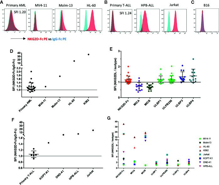 NKG2D-ligands are frequently expressed in AML and T-ALL (A) The NKG2D ligand surface expression in primary AML bone marrow aspirate samples and AML cell lines (MV4-11, Molm-13, HL-60) was analyzed by flow cytometry using the conjugated fusion protein NKG2D-Fc (red) and IgG-Fc isotype (blue) to evaluate ligand detection. The K562 cell line was included as a positive control due to its high level of NKG2D-ligand expression. Primary AML blasts were identified based on viability, CD45dim expression and known patient specific markers including CD117, CD34, HLA-DR, and CD33. Histograms illustrate NKG2D-Fc (red) vs. IgG-Fc (blue) isotype control staining in the respective samples (B) Histograms show NKG2D-Fc (red) vs. IgG-Fc (blue) isotype control staining in primary T-All blasts and T-ALL cell lines (KOPT-K1, DND-41, HPB-ALL, Jurkat). Primary T-ALL blasts were identified based on viability and a combination of CD45, CD2, CD3, CD5, CD7, CD34 and CD8 according to their patient-specific clinical expression pattern (C) Histogram shows NKG2D-Fc (red) vs. IgG-Fc (blue) isotype control staining in the murine melanoma cell line B16 (D) The intensity of NKG2D-Ligand expression is shown as specific fluorescence intensity (SFI), which represents the ratio of the mean fluorescence intensity (MFI) of NKG2D-Fc to IgG-Fc. All examined primary samples (AML n=24) and one representative sample for each of the cell lines (n ≥ 3 for each cell line) are displayed in comparison. SFI > 1 is indicative of NKG2D-ligand expression above isotype (E) Staining of primary AML samples with available antibodies to the individual NKG2D-ligands was also undertaken and is displayed here in comparison (F) SFIs of all examined primary T-ALL samples (n=6) and one representative sample for each of the cell lines (n ≥ 3 for each cell line) are shown (G) Individual NKG2D-ligand staining with available antibodies was also performed on the cell lines indicated.
