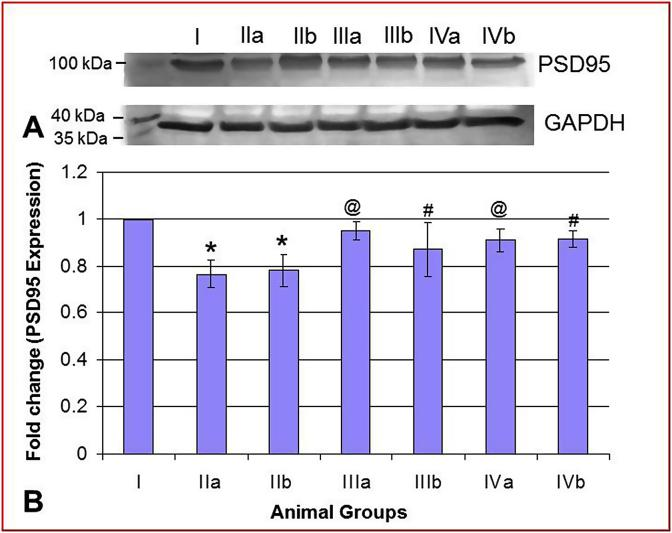 (A) Immunoblots of <t>PSD95</t> (cerebellum) of control (I) the experimental (IIa, b; IIIa, b; IVa, b) animals along with loading control (GAPDH). (B) Bar diagram showing fold change in PSD95 expression in the experimental (IIa, b; IIIa, b; IVa, b) vs control group. Values are Mean ± SD. Significant at p
