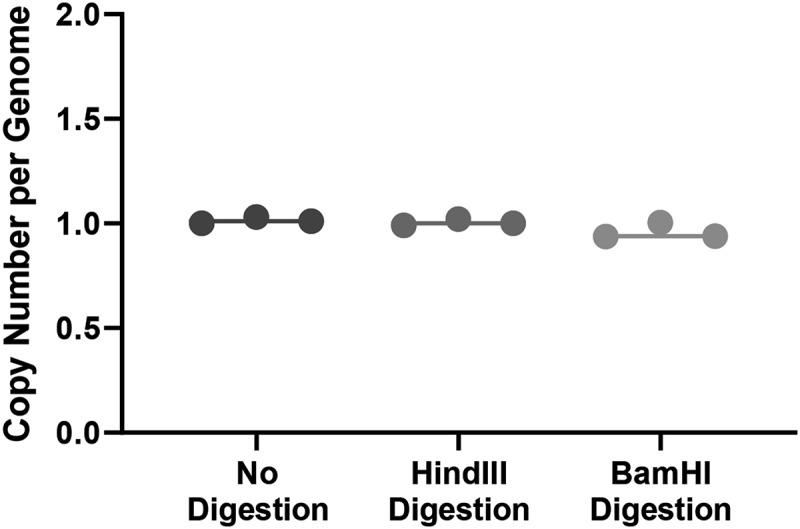 Results of ddPCR with undigested and digested genomic DNA. Results of ddPCR with undigested genomic DNA showed one copy per genome of Cre (blue circles and line). One copy per genome of Cre was detected by ddPCR after digestion with <t>HindIII</t> (red circles and line) and after digestion with <t>BamHI</t> (green circle and line). Results of three independent experiments for each digestion condition are shown