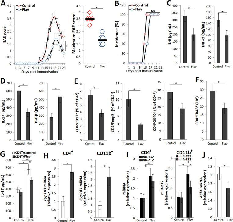 Ahr- and Arid5a-dependent actions mediate the alleviating effects of Flavipin on EAE . MOG 35‐55 emulsified in CFA and pertussis toxin were used to induce EAE. The cytokines were quantified by ELISA, and the expression of mRNA encoding protein and miRNAs was assessed by real‐time PCR and normalized to Gapdh or RNU6B mRNAs, respectively. (A) EAE clinical and maximum score and (B) incidence (%) in vehicle (Control)- or Flavipin (Flav)-treated mice. (C) Levels of IL‐6 and TNF‐α in the serum (day 23 post immunization). (D) Levels of IL‐17 and TGF‐β produced by encephalitogenic CD4 + T cells isolated from the inguinal lymph nodes (10 days post immunization) and restimulated with MOG 35–55 (72 h). (E) Flow cytometry analysis of the frequency (%) of CD4 + IL‐17 + and CD4 + FoxP3 + T cells in the inguinal lymph nodes (day 23 post immunization) and the frequency of CD4 + OX40 + T cells in the CNS (10 days post immunization), gated on CD4 + T cells. (F) Absolute number of CD4 + CD45 + T cells in the CNS (day 10 post immunization). (G) Culture supernatant level of IL‐17 produced by encephalitogenic CD4 + T cells restimulated as described in D in the absence (Control) or presence of agonistic anti-OX40 antibodies (OX86). (H) Relative expression of Cyp1A1 mRNA in CD4 + T cells and CD11b + macrophages isolated from the spleens of EAE mice (day 10 post immunization) compared to the control EAE mice. (I) Relative expression of miR-132 and miR-212 in CD4 + T cells and CD11b + macrophages isolated from the spleens of EAE mice (10 post immunization) compared to the control EAE mice. (J) Relative expression of AChE mRNA in splenocytes from EAE mice (day 10 post immunization) compared to control EAE mice. Data in A and C-J are shown as the mean ± SD from representative experiment out of three independent experiments ( n = 5 each) produced similar results; C-J were studied in triplicates. * p