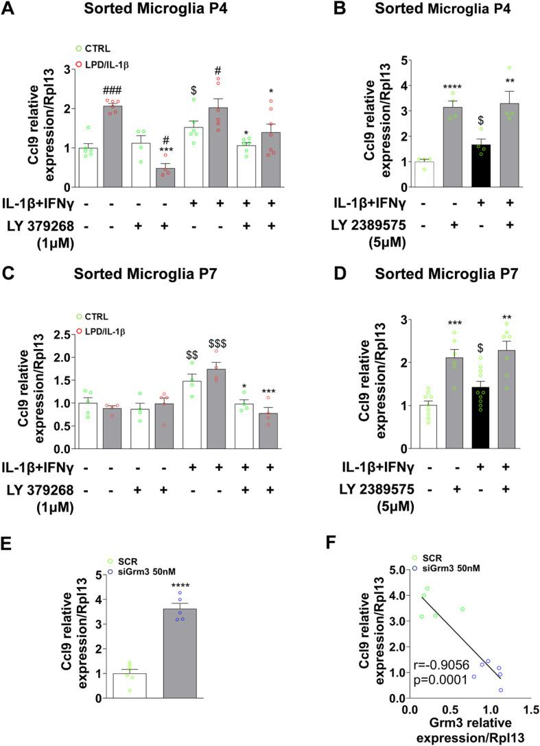 Effects of pharmacological <t>mGlu3</t> receptor modulation and Grm3 knock-down on microglial Ccl9 expression in vitro. a , c mRNA expression of Ccl9 under the pro-inflammatory condition (IL-1β + IFNγ) in the presence of LY 379268 (1 μM) + Ro 64-5229 (25 μM) in CTRL and LPD/IL-1β cultured microglia at P4 ( a ) and at P7 ( c ). Data (mean ± SEM) are relative to the gene expression under basal CTRL conditions. Two-way ANOVA followed by the Newman-Keuls multiple comparison; * p