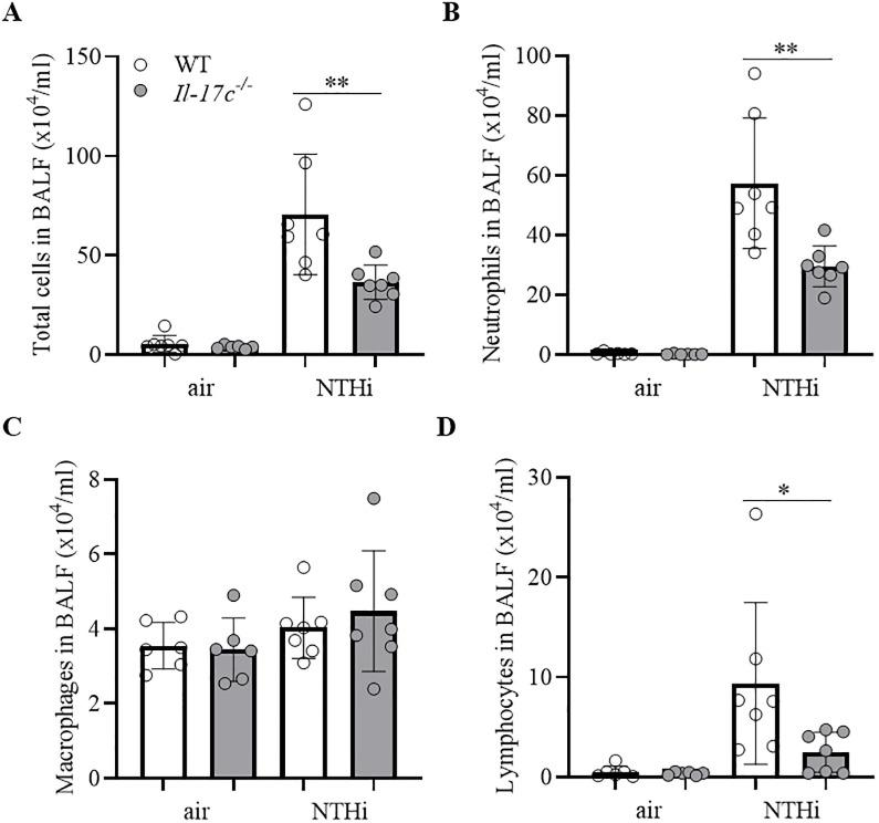 IL-17C mediates chronic neutrophilic inflammation. WT and Il-17c -/- mice were exposed to heat-inactivated NTHi three times a week (day 1, 3, 5) for 4 weeks. Numbers of total immune cells (A), neutrophils (B), macrophages (C), and lymphocytes (D) were determined in BAL fluids 24 hours after the final exposure to NTHi (n = 6–7 per group). Data were compared by One-way ANOVA with Bonferroni post-test and are shown as the mean ± SD. *p