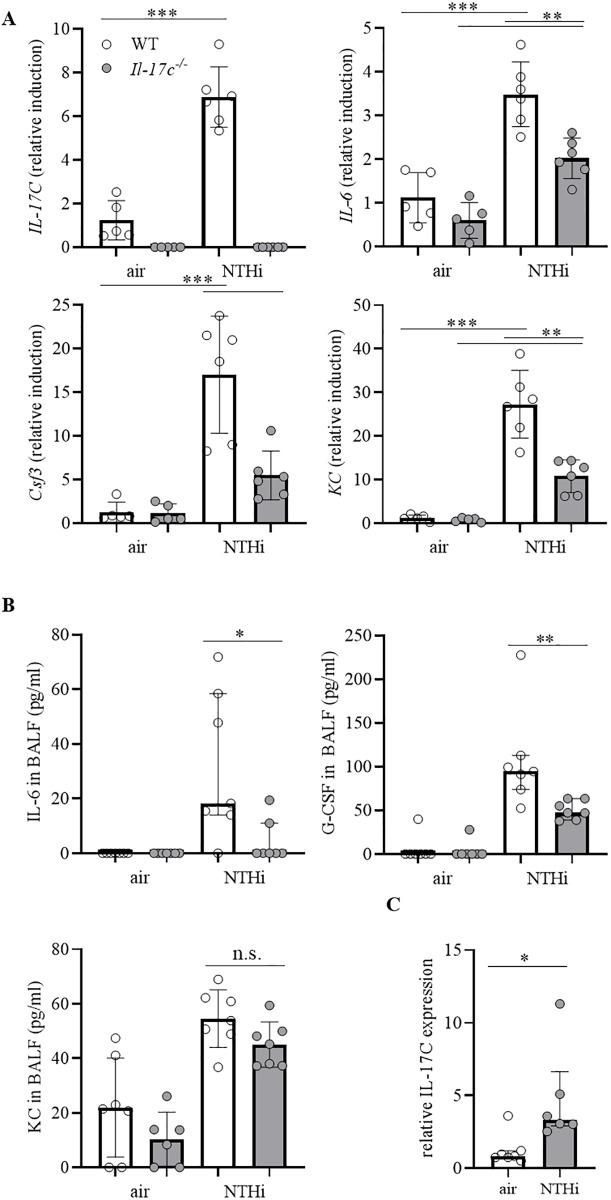 Il-17c deletion decreases the expression of inflammatory cytokines. WT and Il-17c -/ - mice were exposed to heat-inactivated NTHi three times a week (day 1, 3, 5) for 4 weeks. Mice were analyzed 24 hours after the final exposure to NTHi. (A) Relative expression of IL-17C, IL-6, G-CSF, and KC in lung tissue (n = 5–6 mice per group). Data were compared by One-way ANOVA with Bonferroni post-test and are shown as the mean ± SD. **p