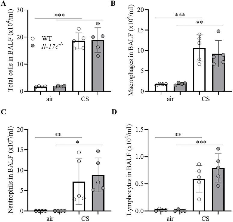 IL-17C does not contribute to CS-induced lung inflammation. WT and Il-17c -/- mice were exposed to CS for 4 weeks five times a week (days 1–5). Numbers of total immune cells (A), macrophages (B), neutrophils (C), and lymphocytes (D) were determined in BAL 24 hours after the final exposure to CS (n = 4–5 mice per group). Data were compared by unpaired Student's t-test and are shown as the mean ± SD. *p