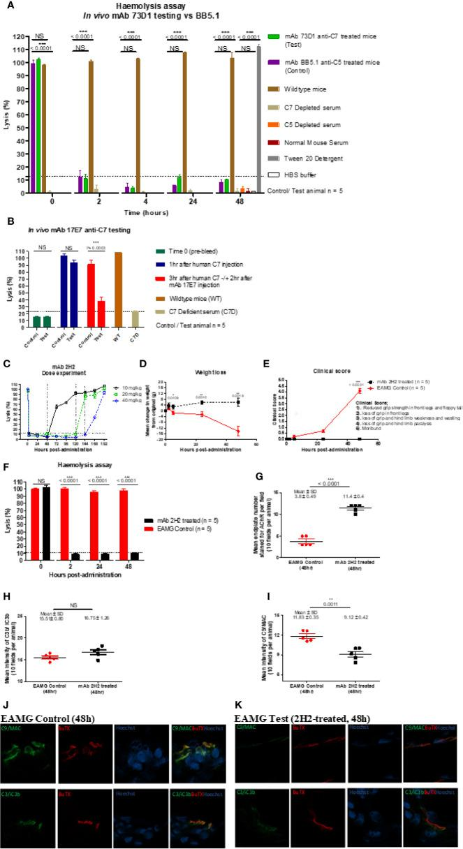 Testing anti-C7 mAbs in vivo . (A) mAb 73D1 or BB5.1 anti-mouse C5 as positive control was administered IP at a dose of 1 mg/kg to female wildtype mice (n=5 per group); blood was sampled at intervals serum obtained and added to human C7D or C5D serum respectively prior to measuring CP hemolytic activity measured. Controls included C7D and C5D human sera at the same dose, NMS to demonstrate the requirement for human depleted sera and 1% Tween-20 and HBS to set 100% and 0% lysis in the assay. Significance of differences between groups was determined by one-way ANOVA; significant differences and p values are shown in the figure. Error bars are standard errors of triplicates. (B) C7-deficient mice (10 females) were reconstituted with human C7 (500µg; IP), then split into test and control groups (5 in each). After 1 h, test and control animals were injected subcutaneously (SC) with 17E7 mAb or irrelevant isotype control mAb (1 mg) respectively. Blood was collected prior to administration of C7, immediately prior to administration of mAb and 3 h after mAb administration. Hemolytic activity was measured as above. Significance of differences between groups was determined using an unpaired t test; significant differences and p values are shown in the figure. Error bars are standard errors of triplicates. (C) Female Lewis rats were divided into three groups (n = 2 each) and injected intraperitoneally with mAb 2H2 at doses of 10, 20, and 40 mg/kg; blood was collected from all the animals just before mAb administration, 2 h after mAb 2H2 administration, and then every 12 h over 1 week. Sera prepared and hemolytic activity tested in standard CP assays. Significance of differences between groups was determined using an unpaired t test; significant differences and p values are shown in the figure. Error bars are standard errors of triplicates. (D–F) EAMG was induced in rats (5 per group) and either mAb 2H2 or isotype control mAb(10mg/kg) administered at induction. Weight loss (D) 