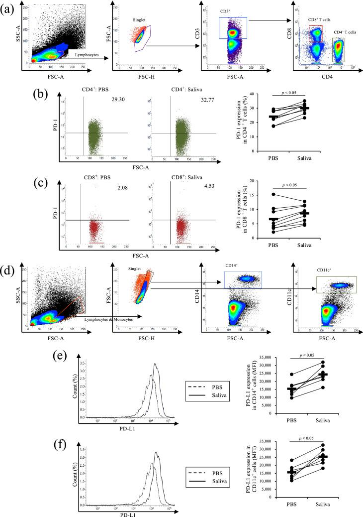 Upregulation of PD-1 and PD-L1 expression by Rhipicephalus microplus saliva (Rm-saliva). ( a – f ) PBMCs were cultured with Rm-saliva. ( a ) Gating strategy for PD-1 staining. ( b , c ) PD-1 expression in CD4 + ( b ) and CD8 + ( c ) T cells was measured by flow cytometry. ( d ) Gating strategy for PD-L1 staining. ( e , f ) PD-L1 expression in CD14 + ( e ) and CD11c + ( f ) cells was measured by flow cytometry. ( a – f ) Statistical difference was identified by the Wilcoxon signed-rank test. MFI mean fluorescence intensity.