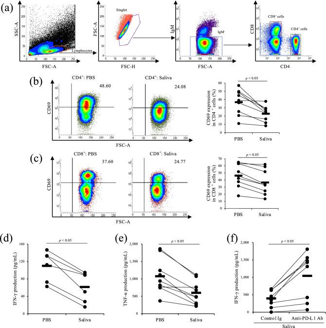 Inhibition of Th1 responses by Rm-saliva. ( a – e ) PBMCs were cultured with Rm-saliva in the presence of anti-CD3 and anti-CD28 mAbs. ( a ) Gating strategy for CD69 expression. ( b , c ) CD69 expression in CD4 + ( b ) and CD8 + ( c ) cells was measured by flow cytometry. ( d , e ) IFN-γ ( d ) and TNF-α ( e ) concentrations in culture supernatants were determined by ELISA. ( f ) PBMCs were cultured with anti-PD-L1 Ab (Boch4G12) in the presence of Rm-saliva. Bovine IgG was used as a control Ab. PBMCs were stimulated by anti-CD3 and anti-CD28 mAbs. IFN-γ concentration was determined by ELISA. ( a – f ) Statistical difference was identified by the Wilcoxon signed-rank test.