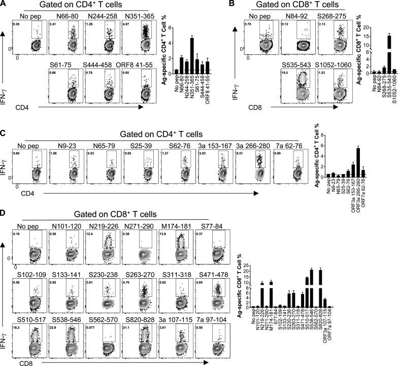 Identification of CD4 + and CD8 + T cell epitopes in SARS-CoV-2–infected WT BALB/c and C57BL/6 mice. (A and B) Confirmation of CD4 + T cell epitopes (A) and CD8 + T cell epitopes (B) in infected BALB/c mice. Flow plots and summary columns are shown ( n = 3; data verified in two independent experiments). (C and D) Confirmation of CD4 + T cell epitopes (C) and CD8 + T cell epitopes (D) in infected C57BL/6 mice. Flow plots and summary columns are shown ( n = 3; data verified in two independent experiments). All results are expressed as mean ± SEM. Ag, antigen; pep, peptide.