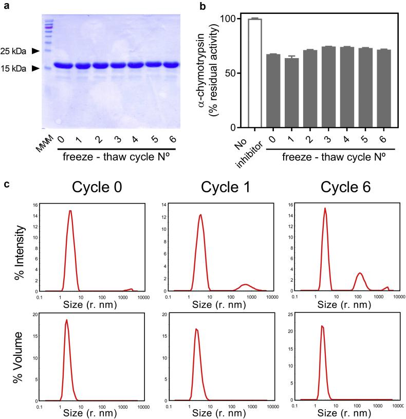 Impact of multiple freeze-thaw cycles on U-Omp19 stability. Samples of U-Omp19 were subjected to multiple freeze and thaw cycles. (a) SDS–PAGE Coomassie stained gels of non-reduced U-Omp19 samples after 0 (lane 2) to 6 (lane 8) freeze-thaw cycles. Lane 1: Molecular Weight Markers (MWM). (b) Percentage of α-chymotrypsin proteolytic activity remaining upon incubation with buffer (No inhibitor) or 50 μM of each U-Omp19 sample after 0 to 6 freeze-thaw cycles. (c) Dynamic light scattering measurements: Representative particle size distribution profiles by intensity and volume for U-Omp19 samples without freezing (Cycle 0) or after 1 or 6 freeze-thaw cycles.