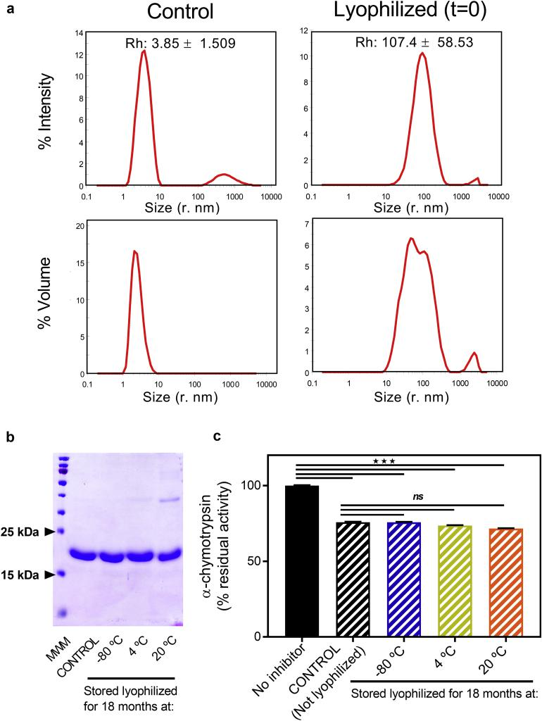 Impact of lyophilization and long-term storage in solid state on protease inhibitor activity, protein integrity, and aggregation of U-Omp19. Samples of U-Omp19 were freeze dryed and placed for long term stability studies for up to 18 months at −80 °C, 4 °C, and 20 °C (RT). (a) Dynamic light scattering measurements: Comparison of particle size distribution profiles by intensity and volume for U-Omp19 samples without freeze drying (Control) or after lyophilization and instant reconstitution (t = 0). (b) SDS–PAGE Coomassie stained gel of reduced U-Omp19 samples. Lane 1: Molecular Weight Markers (MWM), Lane 2: U-Omp19 in aqueous solution (not lyophilized). Lane 3 to 5: lyophilized U-Omp19 after reconstitution stored in solid state for 18 months at the indicated temperatures. (c) Recovered inhibitor activity expressed as percentage of α-chymotrypsin proteolytic activity (mean ± SEM) remaining upon incubation with buffer (No inhibitor), 50 μM of U-Omp19 control sample (not lyophilized) or lyophilized and rehydrated U-Omp19 samples after storage in solid state for 18 months at indicated temperatures. ★★★: P