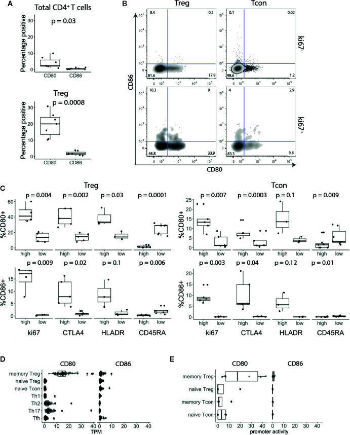 CD80 and CD86 are expressed on human in vivo activated conventional and regulatory T cells. (A) Graphs show percentage of CD80 + and CD86 + T cells across seven donors. (B) Cells were gated on CD3 + CD4 + T cells and based on FoxP3 expression divided into Treg and Tcon. Cells were further gated on Ki-67 and analysed for CD80 and CD86 expression. (C) Graphs show percentage of CD80 + and CD86 + Tcon and Treg expressing either high or low levels of Ki-67, CTLA-4, HLA-DR and CD45-RA. (D , E) Boxplots show CD80 and CD86 RNA expression levels (D) and promoter activity (E) . Data were downloaded from DICE and FANTOM5 databases respectively. TPM—transcripts per million. All p-values were calculated using unpaired two-tailed T-test.