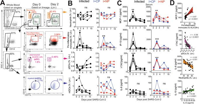 SARS-CoV-2 infection leads to rapid and transient shifts in innate immune responses in peripheral blood. A Representative gating strategy for innate immune subsets in whole blood after gating on singlets. Fluorochromes used were CD3/CD20- APC-Cy7, CD14-A700, CD8- BUV 805, CD66-APC, HLA-DR-BV786, CD16-BV605, CD123-BV421, CD11c-Pe-Cy7. B Kinetics of innate immune responses (pro-inflammatory monocytes; * p = 0.01 at d2 and d4 relative to d0 using a one-tailed paired t test in infected animals, ** p = 0.006 and 0.002 at d2 and d4 relative to d0 in infused animals, pDCs; ** p = 0.005 at d2 relative to d0 using a one-tailed paired t test in infected animals, * p = 0.01 at d2 relative to d0 using a one-tailed paired t test in infused animals, mDCs; * p = 0.02 at d2 relative to d0 using a one-tailed paired t test in infected animals). C Serum chemokines monocyte chemoattractant protein (MCP)-1, interferon gamma induced protein (IP)-10, and interferon induced T-cell alpha chemoattractant (I-TAC) (MCP-1; ** p = 0.001 for infected and ** p = 0.005 for infused at d2 relative to d0 using a one-tailed paired t test, IP-10; * p = 0.03 for infected and *** p = 0.0008 for infused at d2 relative to d0 using a one-tailed paired t test, ITAC; *** p = 0.0005 for infected and *** p = 0.0007 for infused at d2 relative to d0 using a one-tailed paired t test). D Correlation of innate immune cells against chemokines, and interleukin (IL)-10 vs IL-6 (two-tailed Pearson test p values shown, 95% confidence bands of the best fit line are shown).