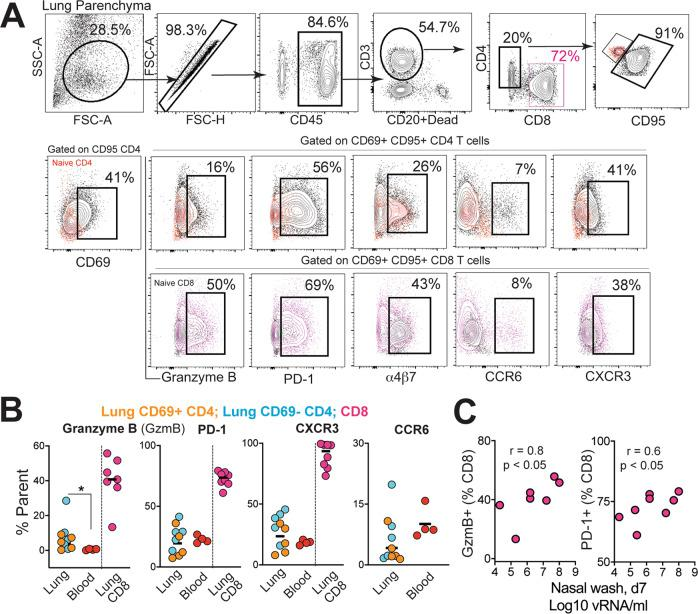 Induction of T h 1 CD4 effectors in the lungs during SARS-CoV-2 infection. A Gating strategy for identifying CD95 + CD69 + CD4 and CD8 cells expressing granzyme B, PD-1, α4β7, CCR6, and CXCR3. Fluorochromes used were CD45-A488, CD3-A700, CD20/Dead-APC-Cy7, CD8-BUV 805, CD4-BV650, CD95-BUV737, CD69-BV711, Granzyme B- BV421, PD-1-Pe Cy7, a4b7-PE, CD25-APC, CCR6-PECF594, CXCR3-BV786. B Percentage of CD4 and CD8 T cells expressing granzyme B, PD-1, CXCR3, and CCR6 in lung and blood (* p = 0.02 using a two-tailed Mann–Whitney U test). C Correlation plot of vRNA from nasal washes and either granzyme B (GzmB) or PD-1 in CD8 T cells (one-tailed Pearson test p values shown).