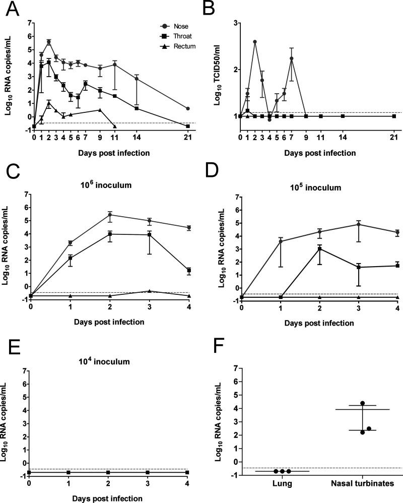 Susceptibility of rabbits to SARS-CoV-2 infection. Infection kinetics of (A) viral RNA and (B) authentic SARS-CoV-2 virus growth curves from rabbits inoculated with 10 6 TCID 50 and followed up for 21 days. (C–E) Viral RNA growth curved in rabbits inoculated with either (C) 10 6 , (D) 10 5 , or (E) 10 4 TCID 50 and followed up for four days post infection. (F) Viral RNA in lung and nasal turbinates of 10 6 TCID 50 infected rabbits, sacrificed after four days. The RNA detection limit was 3.5 × 10 −1 RNA copies/mL, while the live virus detection limit is 12.5 TCID 50 /mL. Error bars depict SEM. n = 3.