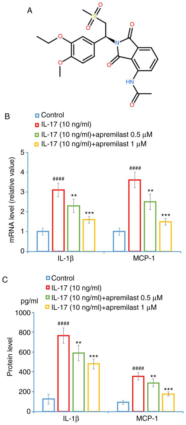Apremilast prevents IL-17-induced expression and secretions of pro-inflammatory cytokines in mouse ATDC5 chondrocytes. Cells were treated with IL-17 (10 ng/ml) in the presence or absence of apremilast (0.5 and 1 µ M) for 24 h. (A) Molecular structure of apremilast. (B) mRNA levels of IL-1β and MCP-1. (C) Secretions of IL-1β and MCP-1. #### P