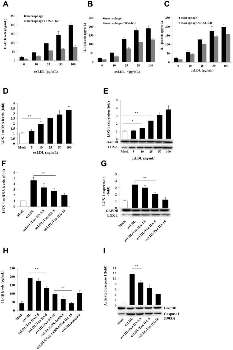 Effects of the LOX-1, CD36 and SR-A1 siRNAs on oxLDL-induced <t>IL-1β</t> productions and effects of oxLDL and Tan IIA on LOX-1 expression and LOX-1-mediated caspase-1activation/IL-1β release. ( A – C ) Effects of lentivirus-mediated LOX-1, CD36 and SR-A1 siRNAs (MOI = 30) on oxLDL-induced IL-1β productions in mouse macrophages measured by <t>ELISA.</t> ( D , E ) Effects of oxLDL on LOX-1 expression in macrophages measured by qRT-PCR and Western blot, respectively. ( F , G ) Effects of Tan IIA on oxLDL-induced LOX-1 expression determined by qRT-PCR and Western blot, respectively. ( H ) Effects of Tan IIA on oxLDL-induced LOX-1-mediated IL-1β expression in macrophages. ( I ) Effects of Tan IIA on oxLDL-induced LOX-1-mediated caspase-1 activation in macrophages.