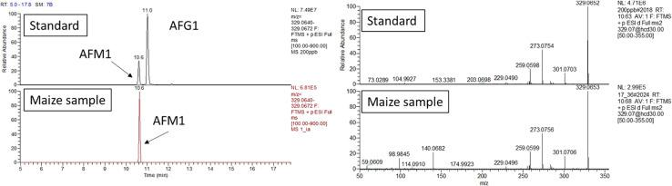 AFM1 confirmation analysis. Retention time and HRMS/MS comparison between calibration standard and maize extract analyzed in the same sequence. The maize extract was passed through an <t>immunoaffinity</t> column for selective clean-up. UHPLC-Q-Exactive full scan (on the left) extracted ion chromatogram (resolving power 70,000 FWHM, extraction window 5 ppm) and (right side) fragmentation pattern obtained with a collision energy of 30 eV.