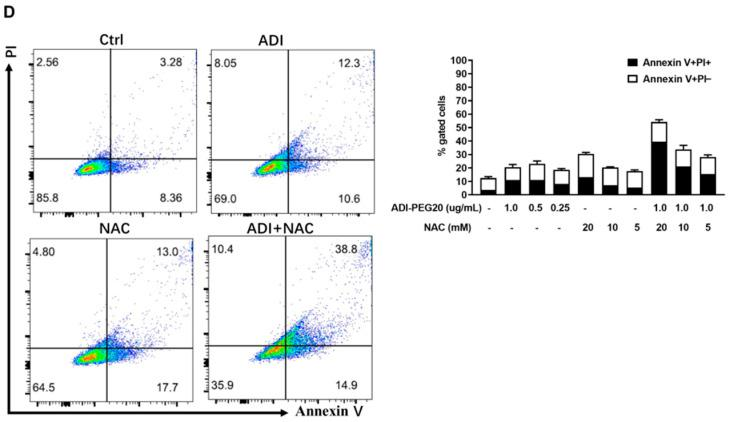 Apoptosis induction by ADI-PEG 20 and NAC. A summary of early (Annexin+/PI−) and late (Annexin+/PI+) apoptotic cell death after 24 h ( A ) and 48 h ( B ) of treatment of MC38 cells and MDA-MB-231 cells for 24 h ( C ) and 48 h ( D ). The x -axis represents Annexin V-FITC staining, and the y -axis represents PI staining. Each experiment was conducted in triplicate. Ctrl: no treatment control; PI: <t>propidium</t> iodide.