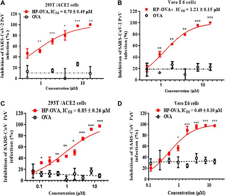 Inhibition of HP-OVA on the infection with SARS-CoV-2 PsV and SARS-CoV PsV. Antiviral activity of HP-OVA against SARS-CoV-2 S PsV infection in 293T/ACE2 (A) or Vero E6 (B) target cells. Inhibition of single-round infection of SARS-CoV S PsV in 293T/ACE2 (C) and Vero E6 (D) cells. Data are presented as the mean ± SD of triplicate samples from a representative experiment (* p
