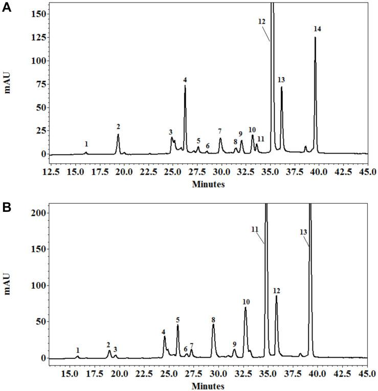 HPLC profile of polyphenols from the leaves of Eclipta prostrata separated on C18 Protect-1, 250 × 4.6 mm eluated with a gradient of acetonitrile in 1% formic acid solution 4 (A) and 8 weeks (B) after inoculation. Peak identifications of (A) : 1 = 5- O -caffeoylquinic acid; 2 = 4- O -caffeoylquinic acid; 3 = caffeic acid; 4 = 3,4- O -dicaffeoylquinic acid; 5 = 3,5-dicaffeoylquinic acid; 6 = luteolin-glucoside; 7 = luteolin-7- O -glucoside; 8 = ferulic acid; 9 = quercetin-3-arabinoside; 10 = demethyl wedelolactone; 11 = feruloylquinic acid; 12 = 4,5- O -dicaffeoylquinic acid; 13 = luteolin; 14 = wedelolactone. Peak identifications of (B) : 1 = 5- O -caffeoylquinic acid; 2 = 4- O -caffeoylquinic acid; 3 = caffeic acid; 4 = 3,4- O -dicaffeoylquinic acid; 5 = 3,5-dicaffeoylquinic acid; 6 = luteolin-glucoside; 7 = luteolin-7- O -glucoside; 8 = ferulic acid; 9 = quercetin-3-arabinoside; 10 = demethyl wedelolactone; 11 = 4,5-dicaffeoylquinic acid; 12 = luteolin; 13 = wedelolactone.