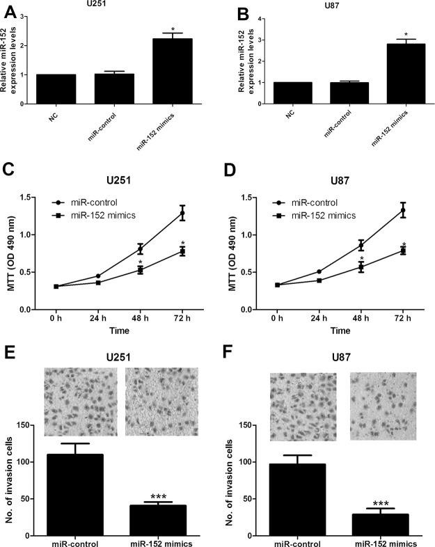 Overexpression of miR-152 suppressed cell proliferation and invasion in glioma cell lines. Expression of miR-152 in U251 (A) and U87 (B) cells transfected with miR-152 mimic or miR-control was quantified by RT-qPCR. MTT assays were applied to observe the proliferation of U251 (C) and U87 (D) cells transfected with miR-152 mimic or miR-control. Transwell invasion assays were performed to assess the invasive ability of U251 (E) and U87 (F) cells transfected with miR-152 mimic or miR-control. * p