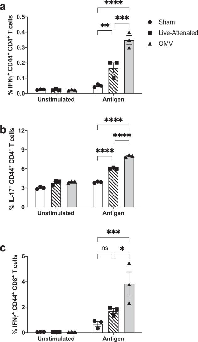 Immunization with M9 OMVs induces memory CD4 and CD8 T-cell responses. a – b Antigen-specific CD44 + CD4 + T cell and c CD8 + T-cell responses were measured in the spleens of mice ( n = 3 per group) immunized with M9 OMV, live-attenuated vaccine, or sham (saline). Splenocytes were restimulated with a-CD28 and heat-inactivated Bp82 grown in M9 (antigen). PMA/ionomycin-treated and unstimulated groups were used as controls. Cytokine-producing T cells were assessed by intracellular cytokine staining and flow cytometry. * p